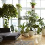 House plants and the flat earth